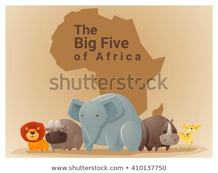 Boyama kitabı Afrika fauna kitap güneş kedi Stok fotoğraf © clairev