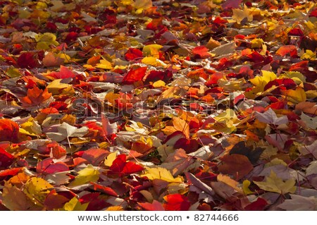 Autumn leaves fallen on grassland Stock photo © Ansonstock