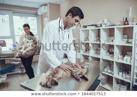 Sablon vektor vállalati logo állatorvosi gyógyszer Stock fotó © antoshkaforever