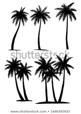 Bomen bosje tropische landschap landelijk Stockfoto © rognar