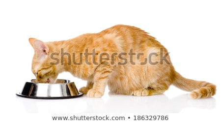 Red cat eating from bowl Stock photo © Hofmeester
