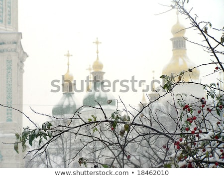 Brunches of dog rose in snow against the church Stock photo © artjazz