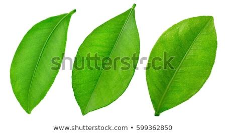 Three white flowers with green leaf Stock photo © boroda