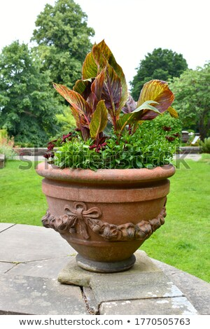 large stone urn with plants in english garden stock photo © backyardproductions