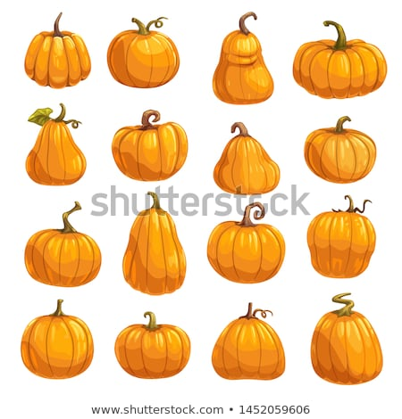 Crop of pumpkins, squash and gourd Stock photo © lovleah