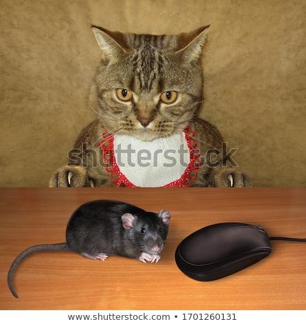 rat and kitten stock photo © eriklam