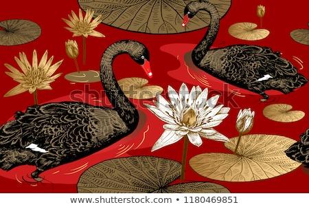 Сток-фото: белый · черный · лебедя · элегантный · синий