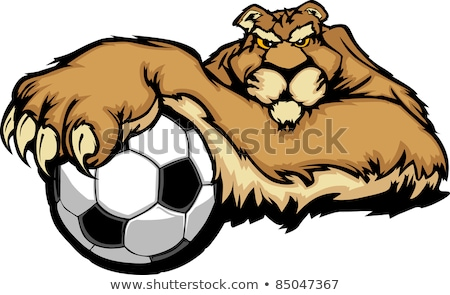 cougar with soccer ball vector illustration stock photo © chromaco