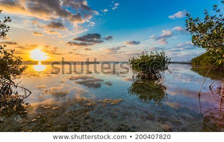 болото · штопор · Флорида · растений · природного - Сток-фото © prill