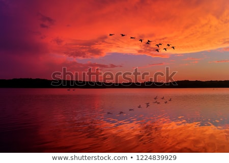 Vogel · Bildung · Sonnenuntergang · Gruppe · Vögel · unter - stock foto © gordo25