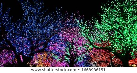 Iluminado árbol árbol de navidad hojas perennes Foto stock © Lightsource