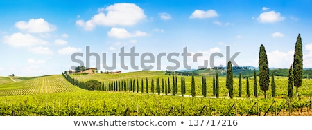 Farmhouse with cypess alley and fields, Tuscany, Italy Stock photo © fisfra