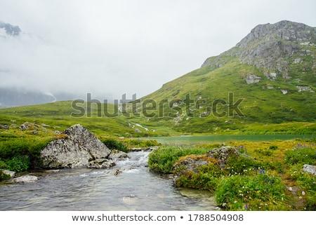 альпийский · луговой · травы · растений · лет · трава - Сток-фото © antonio-s