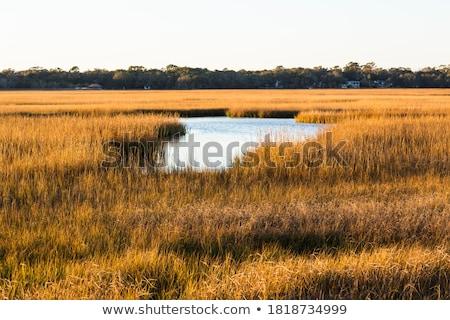 Mocsár tájkép ősz korai őszi szezon víz Stock fotó © brm1949
