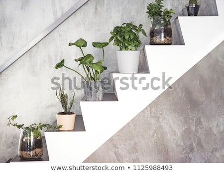 fresh green different herbs and flowers on window outdoor  Stock photo © juniart