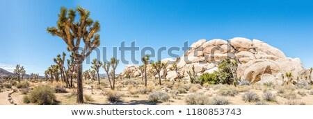 Manzaralı kayalar ağaçlar ağaç park gizlenmiş Stok fotoğraf © meinzahn