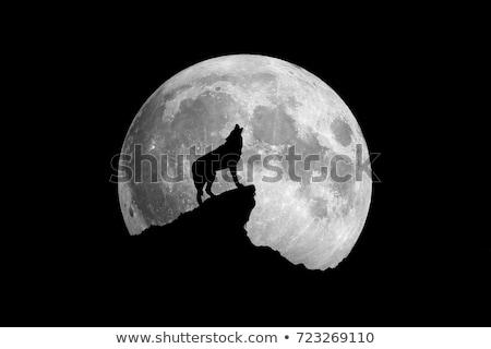 Halloween örnek kurt adam dolunay vektör Stok fotoğraf © glyph