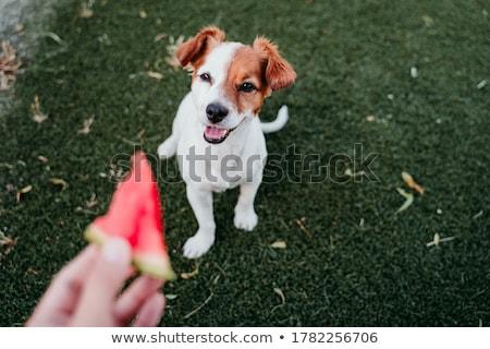 Mooie vrouw vers watermeloen focus meisje Stockfoto © deandrobot