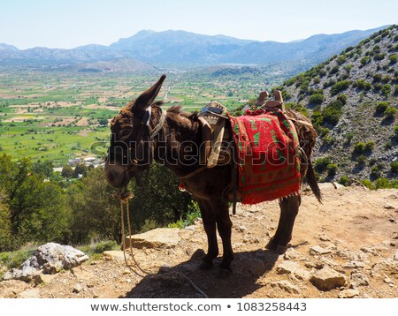 A Greek pack mule rests. stock photo © Sprague