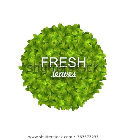 Környezetbarát kör keret zöld levelek illusztráció izolált Stock fotó © smeagorl