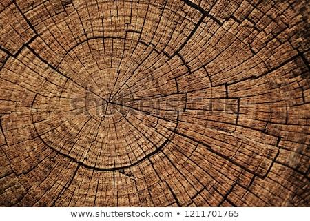 árvore · cortar · para · baixo · textura · grama · madeira - foto stock © fanfo
