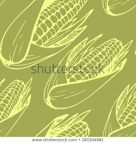 Corn seamless pattern vector illustration. Maize ear or cob. stock photo © yopixart