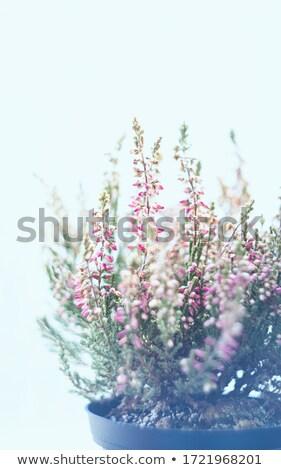 makro · orman · manzara · güzellik · yaz - stok fotoğraf © AvHeertum