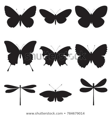 Silhouetten vlinders zwarte gestileerde natuur zomer Stockfoto © blackmoon979