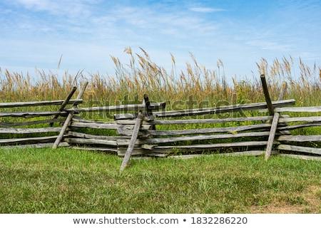 зеленый змеи за трава иллюстрация природы Сток-фото © bluering
