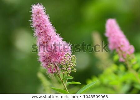 Piccolo rosa fiori pattern piccolo fiore Foto d'archivio © ultrapro