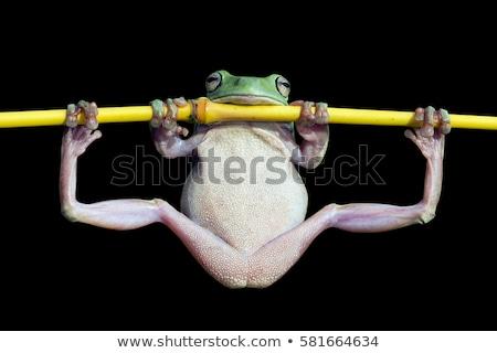 funny frog Stock photo © adrenalina