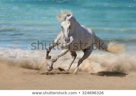 Piękna konie biały rodziny preria morza Zdjęcia stock © joyr
