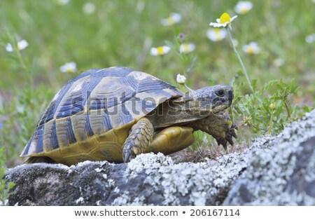 Folha animais tartaruga terra ambiente movimento Foto stock © mady70