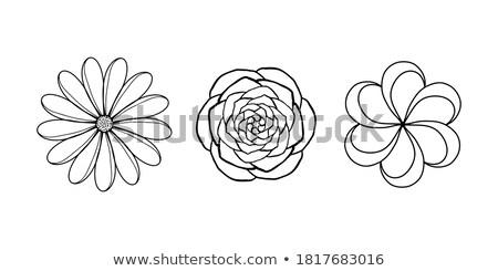 tulips mini set stock photo © tracer