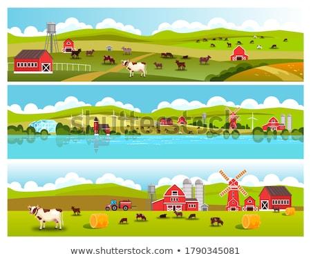 afiş · çiftlik · hayvanları · doğa · tavuk · çiftlik · beyaz - stok fotoğraf © sherjaca