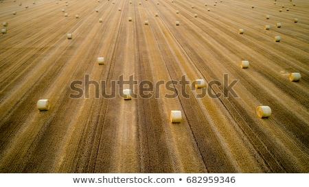 Tracteur foin bale Photo stock © stevanovicigor