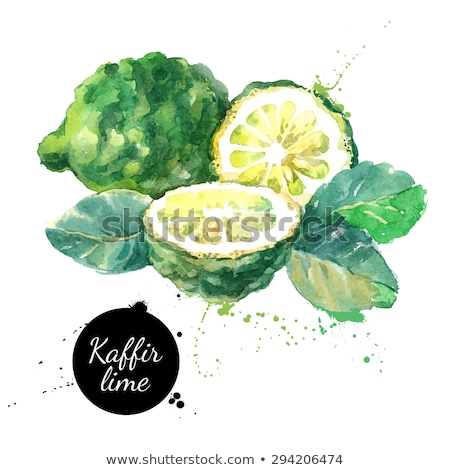 Hand drawn watercolor illustration of lime Stock photo © Sonya_illustrations