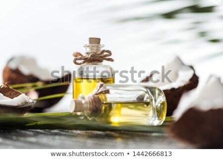 Palmblad selectieve aandacht zonlicht natuur zomer Stockfoto © stevanovicigor