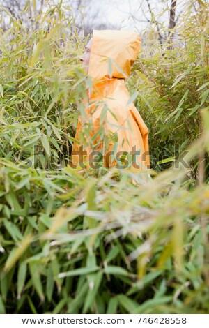 Man regenjas planten natuur bamboe groei Stockfoto © IS2