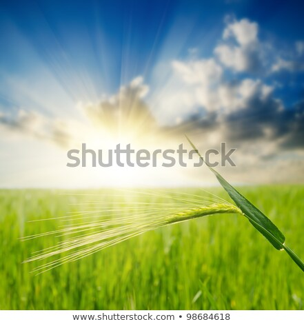 Spring skies over rural farms and crops Stock photo © lovleah