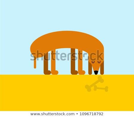 Perro mirando hueso casa mascota esqueleto Foto stock © MaryValery