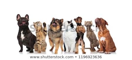Singolare squadra sette gatti cani Foto d'archivio © feedough