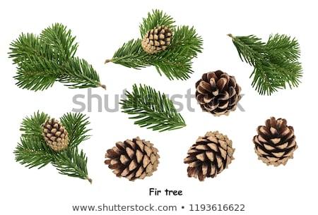 conjunto · natal · ilustração · útil · estilista - foto stock © derocz