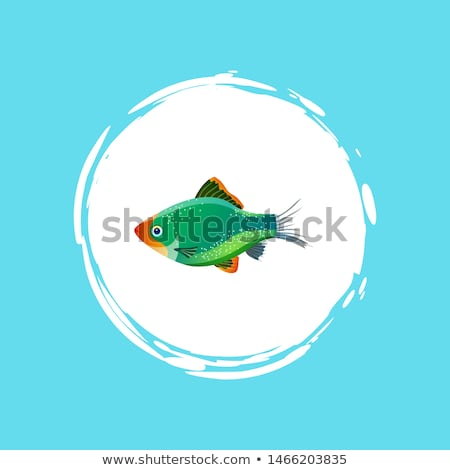green tiger barb in white circle isolated on blue stock photo © robuart