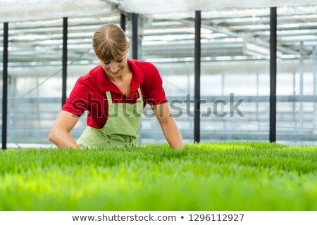 Gardener taking care of wheatgrass in nursery Stock photo © Kzenon