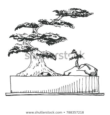 schets · bonsai · rechthoekig · pot · geïsoleerd · witte - stockfoto © Arkadivna