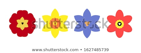 pattern of crocus spring flowers collection violet and yellow stock photo © margolana