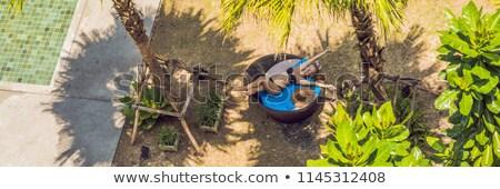 Meisje zon palmbomen zwembad banner lang Stockfoto © galitskaya