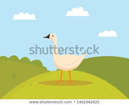 farm bird on grass goose eating farming vector stock photo © robuart