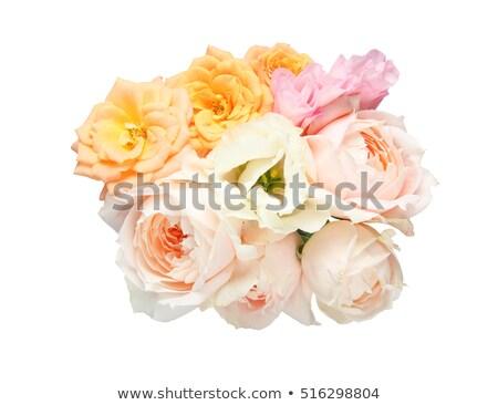 オレンジ バラ 白 クローズアップ 先頭 表示 ストックフォト © CatchyImages